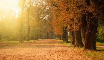 Have You Thought About Selling in Autumn?