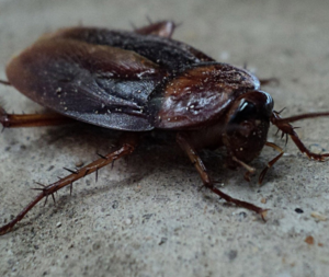 Cocroach 1 300x253 - Unwanted Guests – How to Pest-Proof Your Home