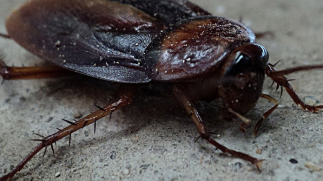 Unwanted Guests – How to Pest-Proof Your Home