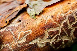 Pest Inspections 300x200 - Pest-Inspections