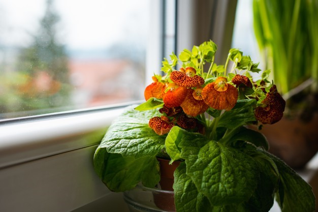 Plant on Windowsill - Give Your Home a Lockdown Makeover