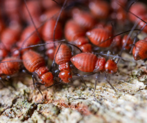 Termites 2 300x251 - Unwanted Guests – How to Pest-Proof Your Home