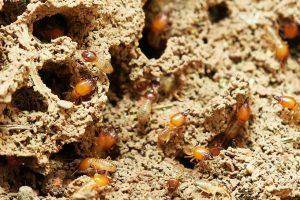 termites 3367350 1280 small version 300x200 - termites-3367350_1280 small version
