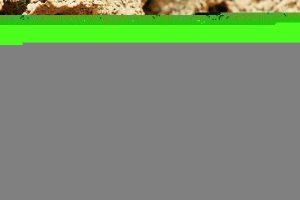 termites 3367350 1920 300x200 - termites-3367350_1920